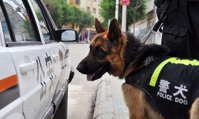 Trung Quốc: Bán đấu giá 54 chú chó nghiệp vụ vì