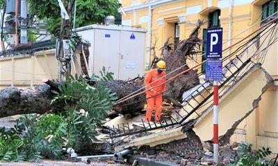 Hà Nội: Cây cổ thụ bật gốc, đổ sập vào tường TAND tối cao do gió lốc lớn