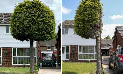 Bức ảnh cây thông bị cắt trụi một nửa bất ngờ thu hút sự chú ý trên khắp nước Anh