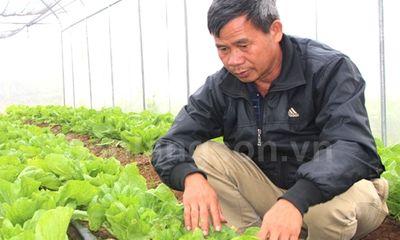 Cao Lộc tập trung phát triển sản phẩm OCOP dựa trên thế mạnh của vùng
