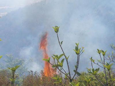 Cháy lớn, 10ha rừng phòng hộ hóa tro