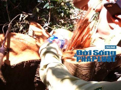 Vụ phá rừng Vũ Quang: CQĐT vào cuộc, trạm trưởng bị cách chức