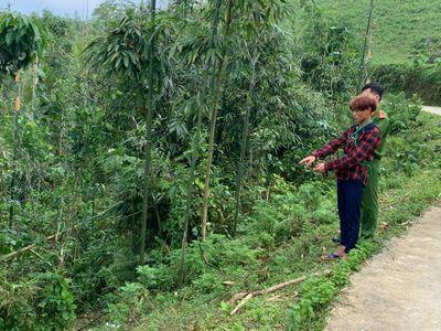 Vụ bé trai 3 tuổi bị sát hại ở Lào Cai: Gia đình hoảng hốt khi nghi phạm bế thi thể em trai về