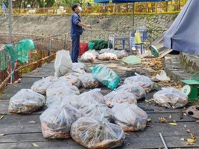 2 tấn cá chết hàng loạt trong công viên ở TP.HCM
