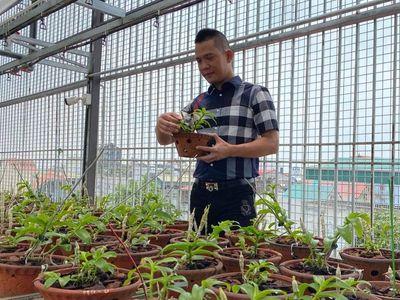 Nghệ nhân Nguyễn Văn Tâm chia sẻ bí quyết chinh phục loài hoa vương giả