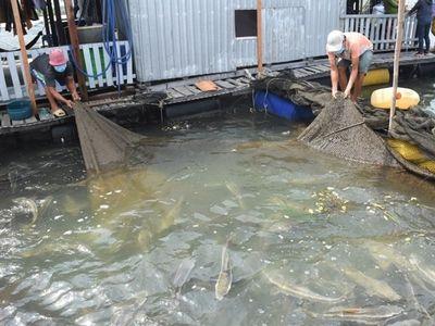 Bà Rịa - Vũng Tàu: Hơn 500 tấn thủy sản