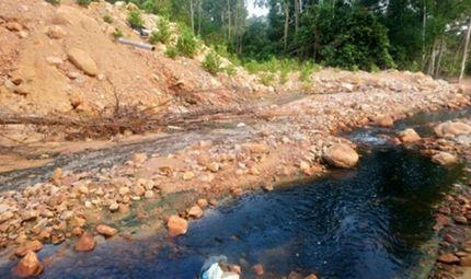 Quyền lợi tiêu dùng - Nghệ An: Doanh nghiệp trồng rừng Lê Duy Nguyên tùy tiện xả thải gây ô nhiễm môi trường?