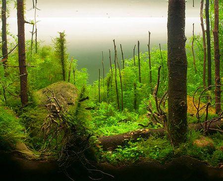 Bể cá Morning forest