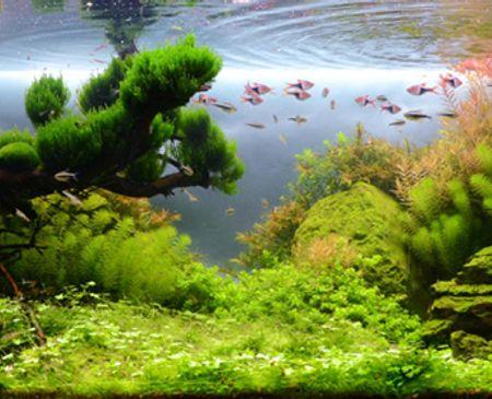 Bể cá Windtalkers