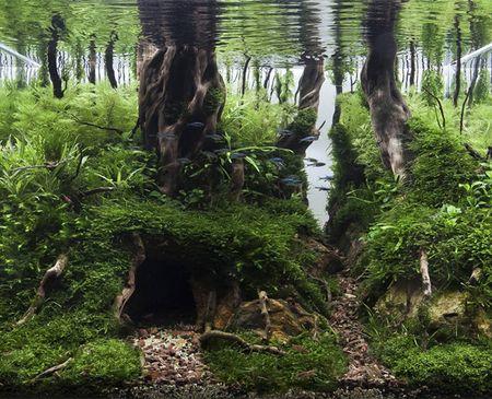 Bể cá Forest Lair