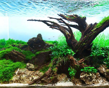 Bể cá Old tree