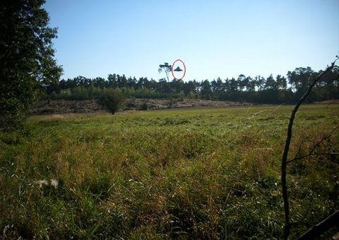 Tin thế giới - Đĩa bay UFO xuất hiện giữa ban ngày ở Ba Lan