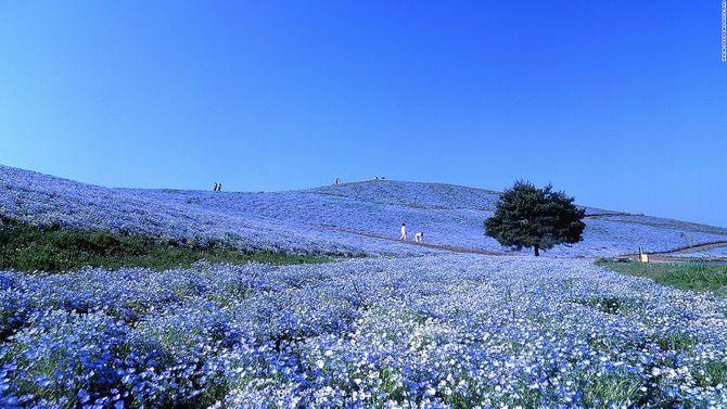 Lạc vào chốn thần tiên ở Nhật Bản - Ảnh 11