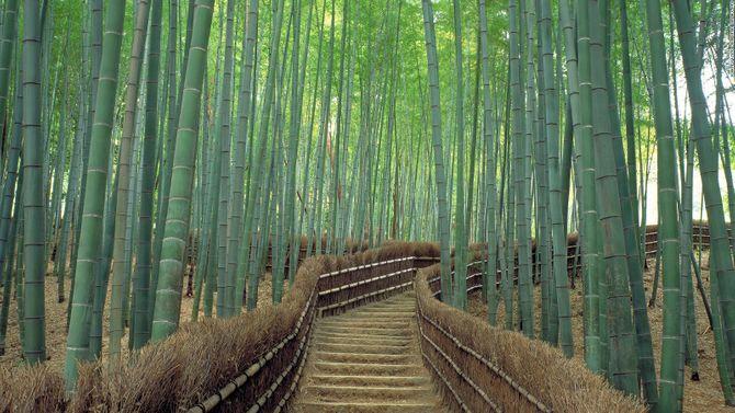 Lạc vào chốn thần tiên ở Nhật Bản - Ảnh 12