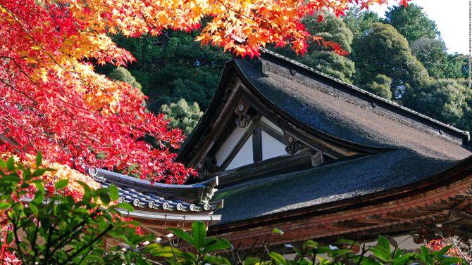 Lạc vào chốn thần tiên ở Nhật Bản - Ảnh 20