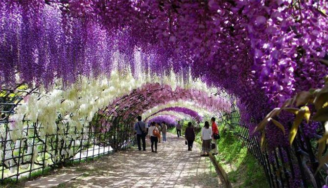 Lạc vào chốn thần tiên ở Nhật Bản - Ảnh 1