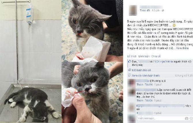 Xôn xao chuyện quán cà phê mèo bị các tay đánh bả tổng tấn công