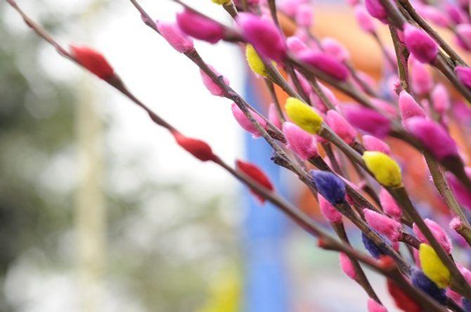Ý nghĩa thiêng liêng của những loại hoa ngày Tết - Ảnh 10