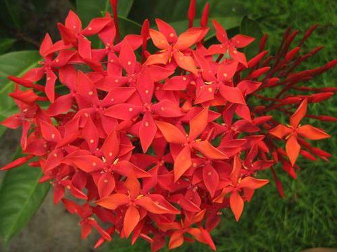 Ý nghĩa thiêng liêng của những loại hoa ngày Tết - Ảnh 3