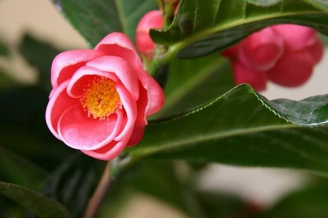 Ý nghĩa thiêng liêng của những loại hoa ngày Tết - Ảnh 4
