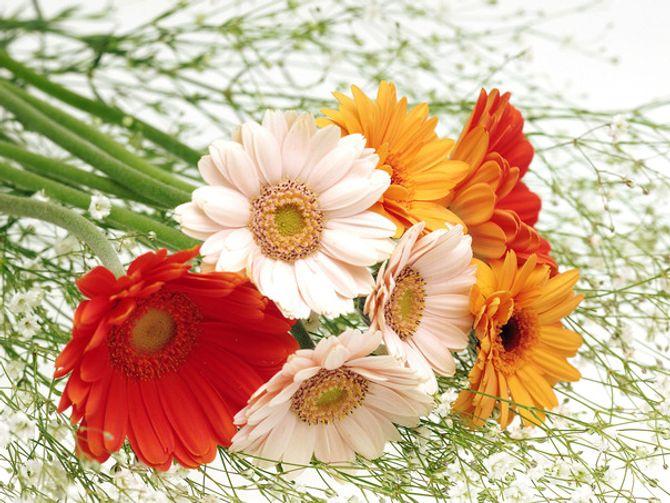 Ý nghĩa thiêng liêng của những loại hoa ngày Tết - Ảnh 6