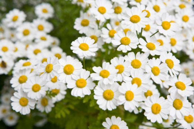 Ý nghĩa thiêng liêng của những loại hoa ngày Tết - Ảnh 7